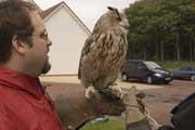 Paul-Owl